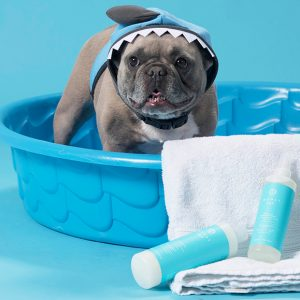 Pamper-Your-Pet_HEADER